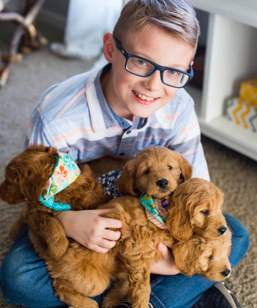 Boy smiling with four goldendoodle puppies