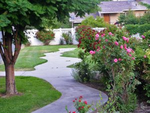 Curvy Path Through a Rose Garden