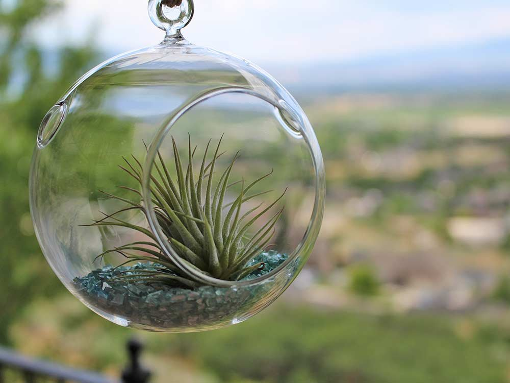 Hanging glass pot in a window